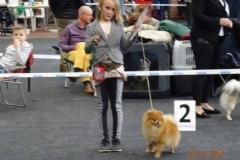 Pomeranian-THESEUS-NA-VÝSTAVĚ